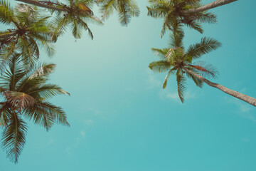 Vintage color stylized palms over sky background with copy space