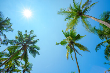 Palms with shining sun on clear blue sky