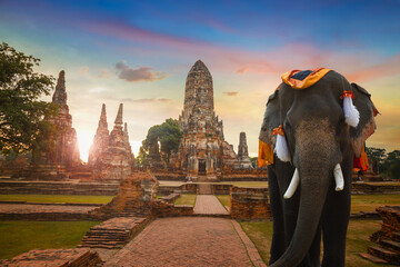 Elephant at Wat Chaiwatthanaram temple in Ayuthaya Historical Park, a UNESCO world heritage site in Thailand Fototapete