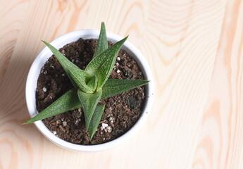 Cactus desde arriba ,con fondo madera.