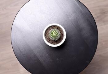 Cactus desde arriba, en mesa redonda negra.