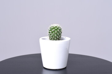 cactus en maceta blanca, con fondo gris y mesa negra