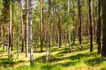 Wald in Brandenburg