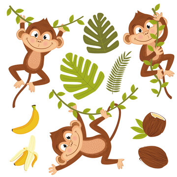 set of isolated monkey with plants and fruits - vector illustration, eps
