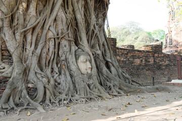 ワット・マハータートにある菩提樹の根で覆われた仏像の頭
