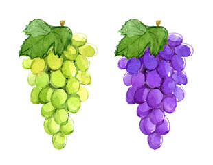 Branch of blue and green grapes, isolated on white background, watercolor illustration