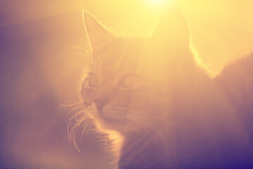 Silhouette of a cat lying outdoor against the sun.