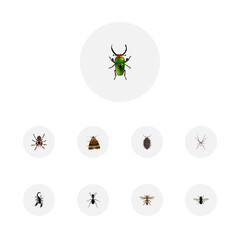 Realistic Insect, Spider, Wisp And Other Vector Elements. Set Of Insect Realistic Symbols Also Includes Insect, Beetle, Arachnid Objects.
