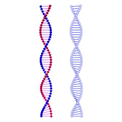 Abstract DNA spiral. Isolated on white background. Vector illustration.