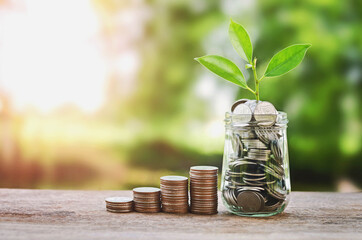 Plant growing on Coins glass jar  and concept money saving