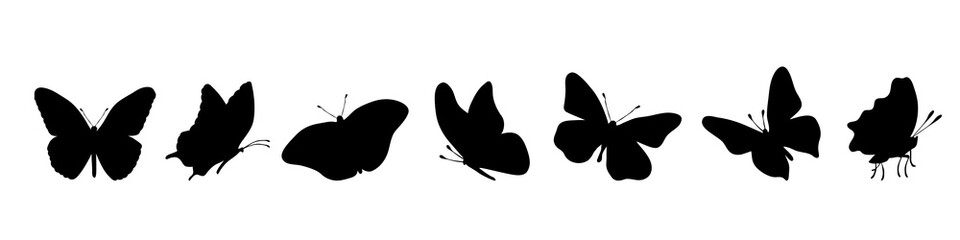 Vector silhouette of butterflly on white background.