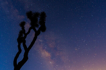 A Gnarly Joshua Tree is Silhouetted by the Milk Way