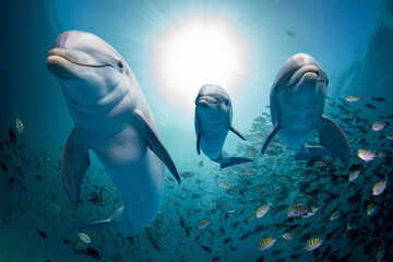 Foto auf Leinwand Delphin dolphin family underwater on reef close up look