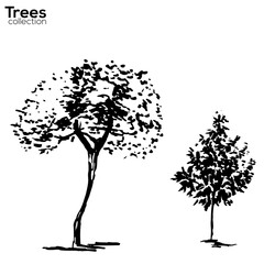 Trees collection. Ink trees silhouettes