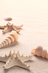 seastars or starfish and sea shells on beach sand, a background with copy space.