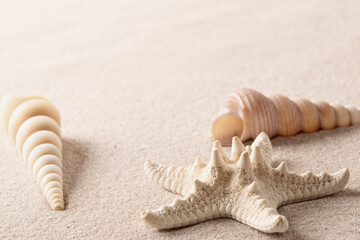 Starfish or sea star and two cone shells on beach sand. Background with copy space.