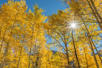 Aspen Sunshine