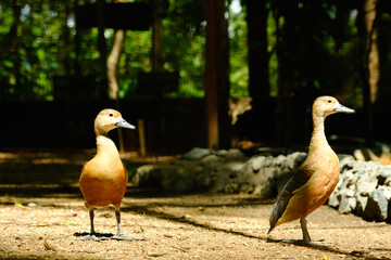 Teal bird in nation park