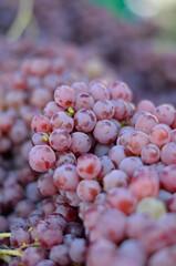 red grapes at farmer's market
