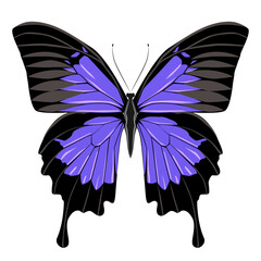Bright beautiful blue butterfly. Vector illustration isolated.