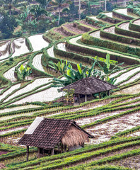 Agricultural fields (rice terraces) - Bali, Indonesia