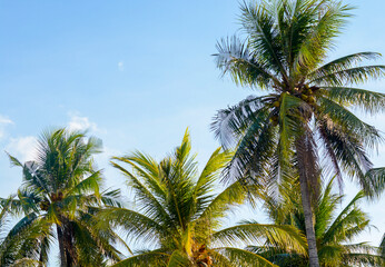 Coconut palm trees, beautiful tropical and sky background