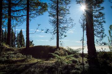 Hiking in idyllic nature of Gran Canaria, Spain