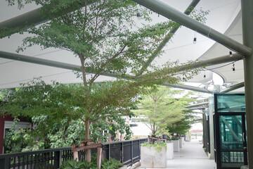 Green Plants On Rooftop Garden