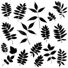 Set of leaves silhouettes