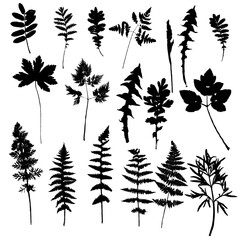 Set of plants and leaves silhouettes