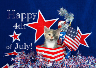 Patriotic calico kitten sitting in red white stripped box tinsel with white stars on table in front of her. blue background with red stars outlined in white, American flag kitten  Happy 4th July text.