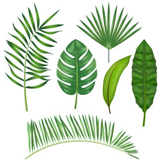 Realistic Detailed Green Leaves of Plants. Vector