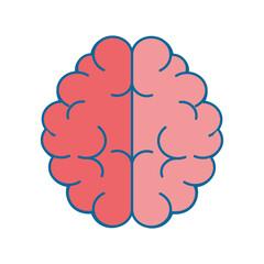brain human organ vector icon illustration graphic design