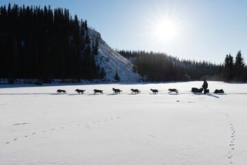 Dog sled racing in Yukon Quest