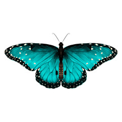 butterfly symmetric top view of turquoise with spots , sketch vector graphics color picture