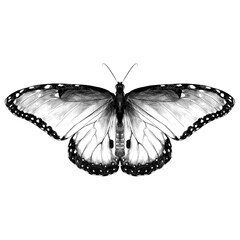 butterfly symmetrical top with stains , sketch vector graphics black and white drawing