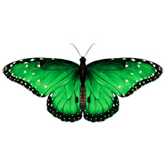 butterfly are symmetrical and the top is green with spots , sketch vector graphics color picture
