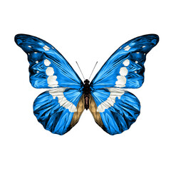 blue butterfly with white spots on the wings of the symmetric top view sketch vector graphics color picture