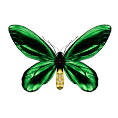 green butterfly with black pattern on the wings of the symmetric top view sketch vec