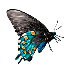 butterfly with a blue body,blue & grey wings and orange spots on the wings side view, sketch vector graphics color picture
