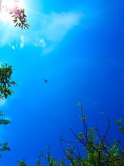 blue sky clouds plane