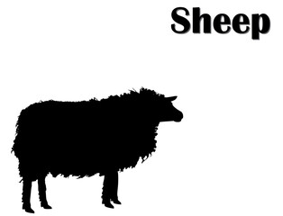 Black silhouette of sheep on white background. Farm animals, vector, eps 10