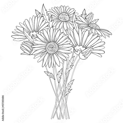 Vector bouquet with outline Chamomile flowers, bud and leaf isolated