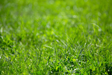 Background of green juicy grass