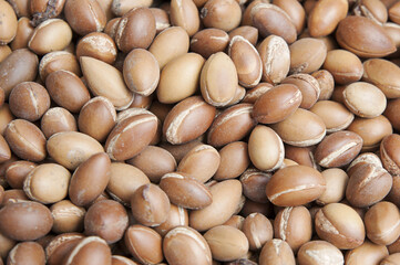 Horizontal background shot of argan seeds, the most valued crop of Argania spinosa, or commonly known as Argan tree, for its rich in oils seeds and valuable byproduct