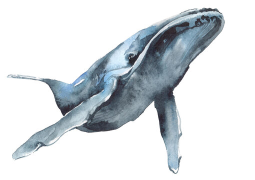watercolor illustration of a blue whale
