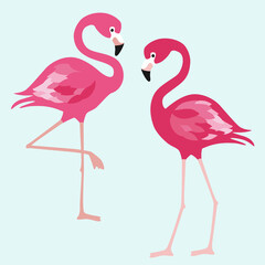 Flamingo. Exotic birds on white background. Vector trendy illustration.
