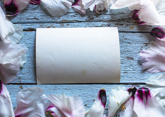 Wedding flower Peony petals on blue table from above. Flat lay style.
