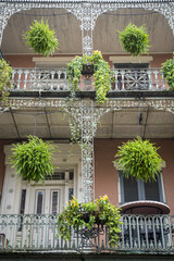 Lush greenery decorating the wrought iron filigree detailing of a typical balcony of a double-gallery building in the French Quarter of New Orleans, USA