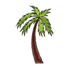 scribble color palm cartoon vector graphic design